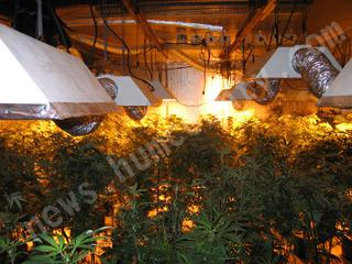 Growing pot indoors can be affected by power outages