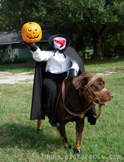 Dogs wearing ridiculous but cute Haloween costumes