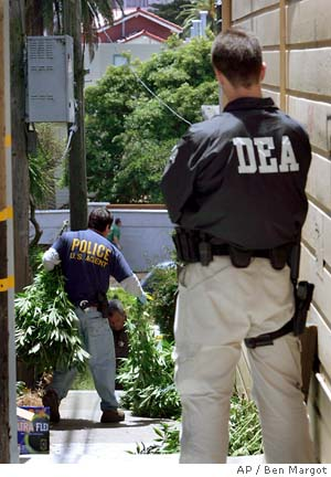 DEA FBI IRS raided marijuana growers in June 2008 in Humboldt county