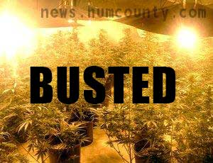 Another Humboldt marijuana grower gets busted