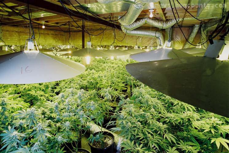 large scale indoor pot production