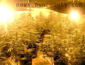 just another pot grow in humboldt county